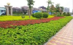 惠州市园林工程设计施工园林景观建设绿化设计施工