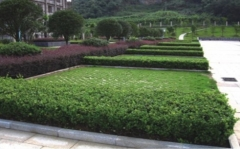 漳平市园林工程设计施工园林景观建设绿化设计施工