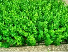 仿真尤加利塑料草坪 仿真植物墙 婚庆装饰草坪道具仿真塑料草坪 40*60:紫色 .