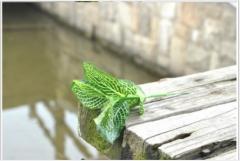 迷你网纹叶 仿真叶 仿真花 绢花 人造花 假花 仿真植物 植物墙